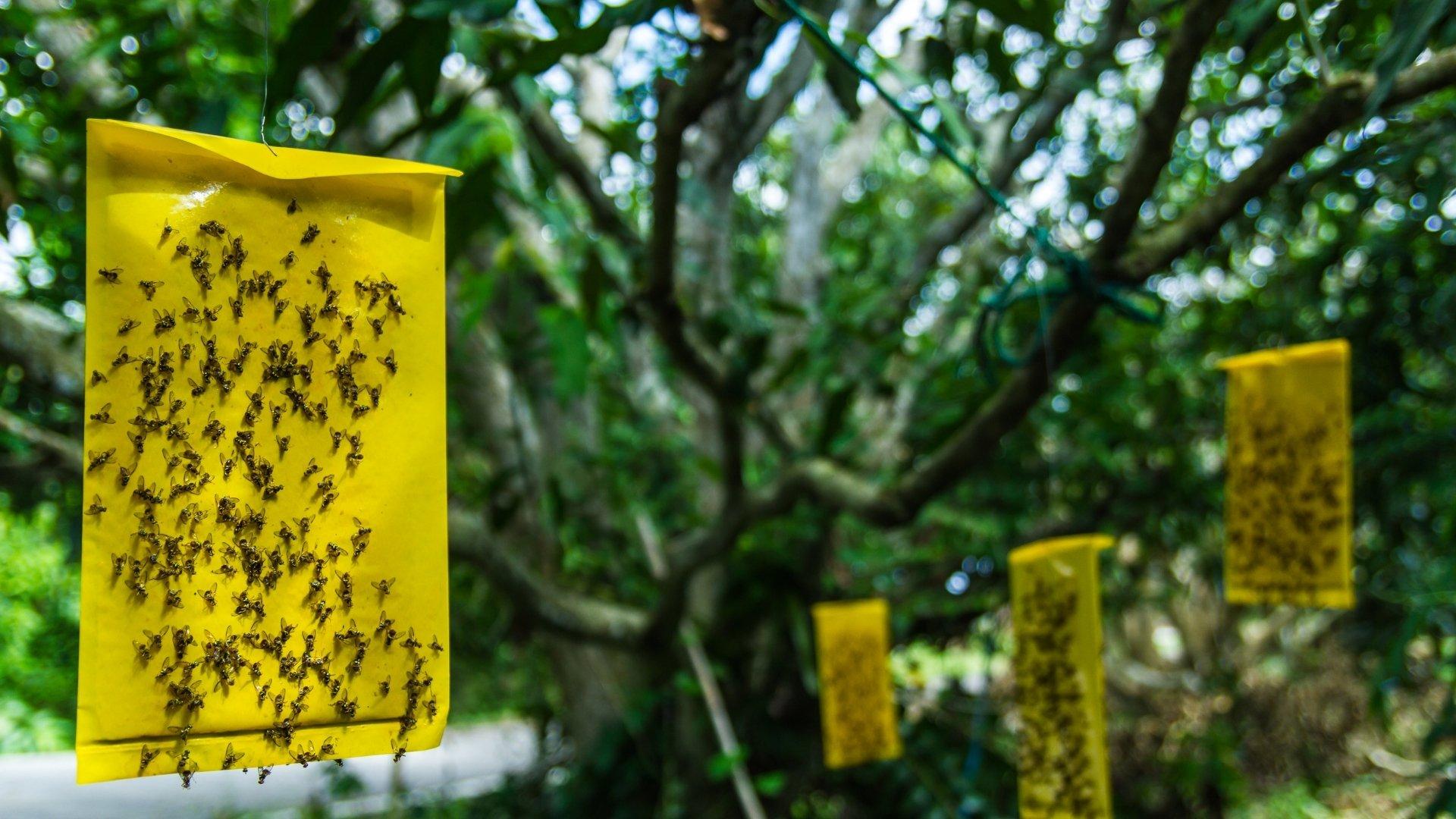 trampa casera para moscas con cinta adhesiva